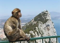 Macaques berbères : les seuls singes à l'état sauvage en Europe